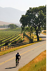 Weekend wine country biking photo